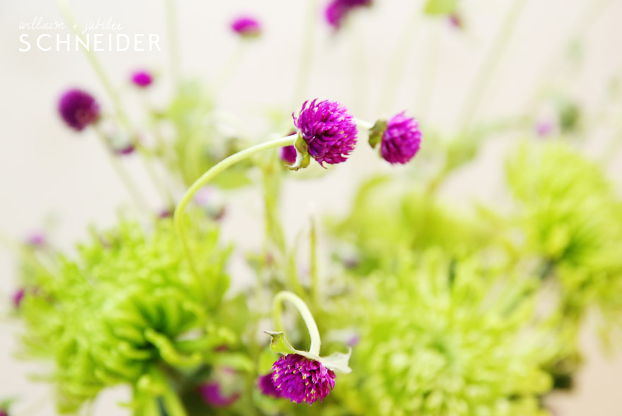 flowers-purple-2