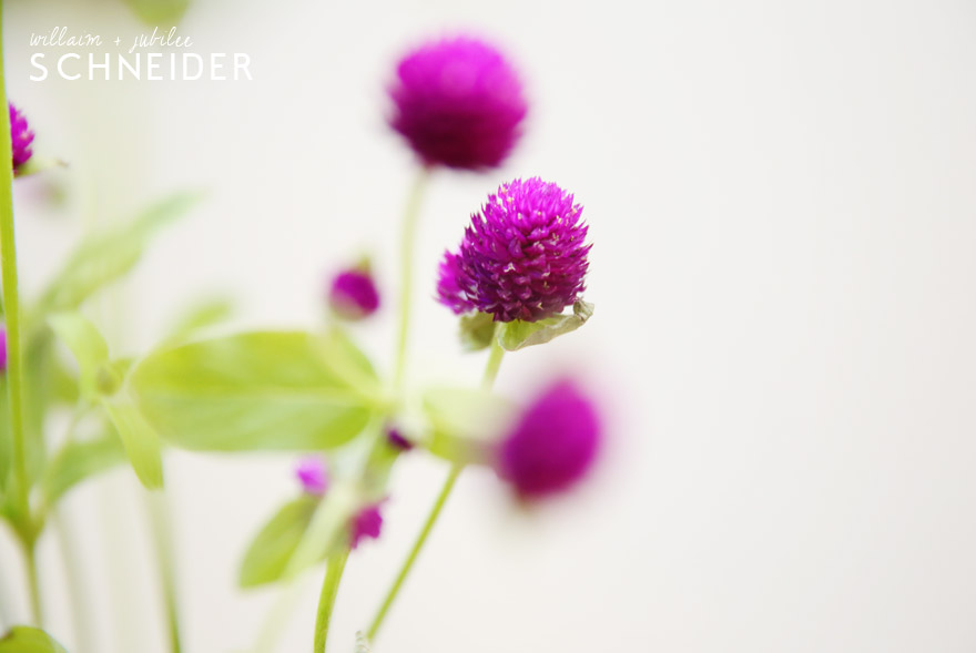 flowers-purple-4