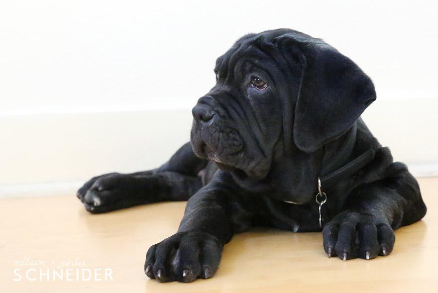c-puppy-7