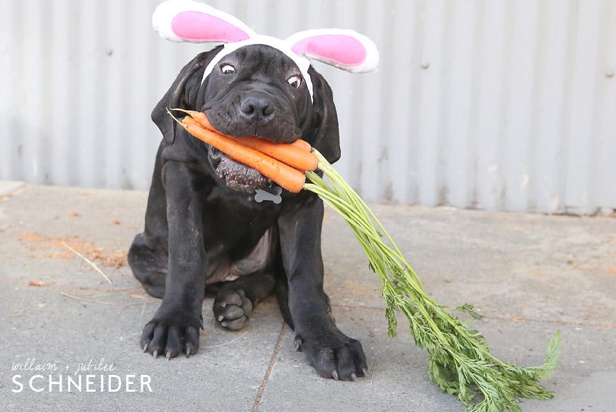 bunny-11