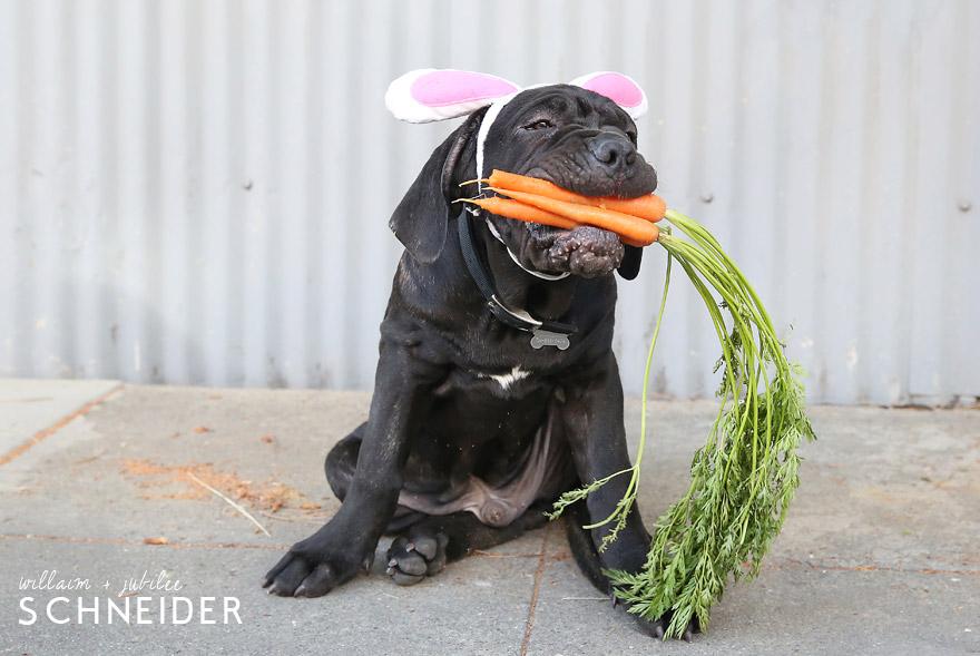 bunny-12