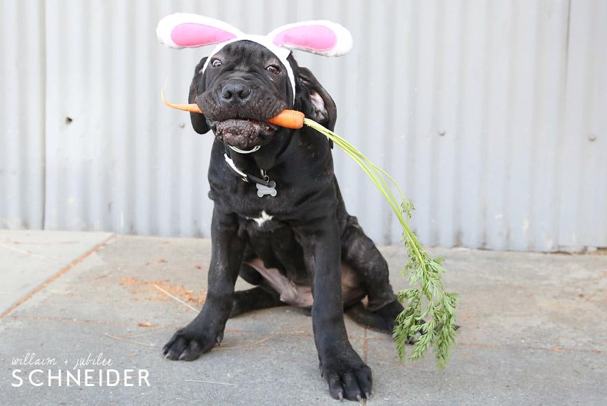 bunny-5