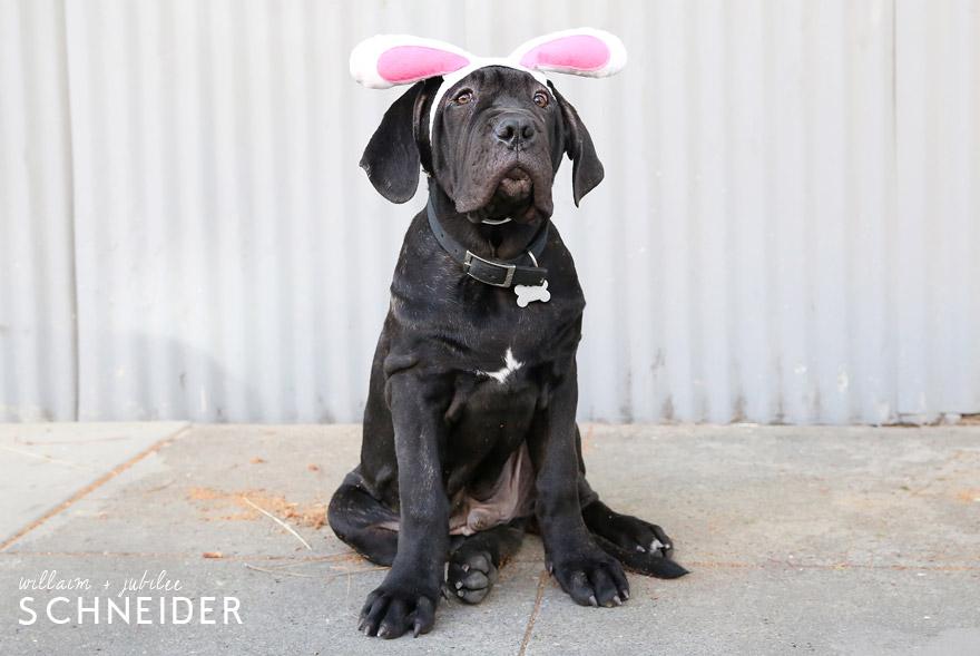 bunny-6