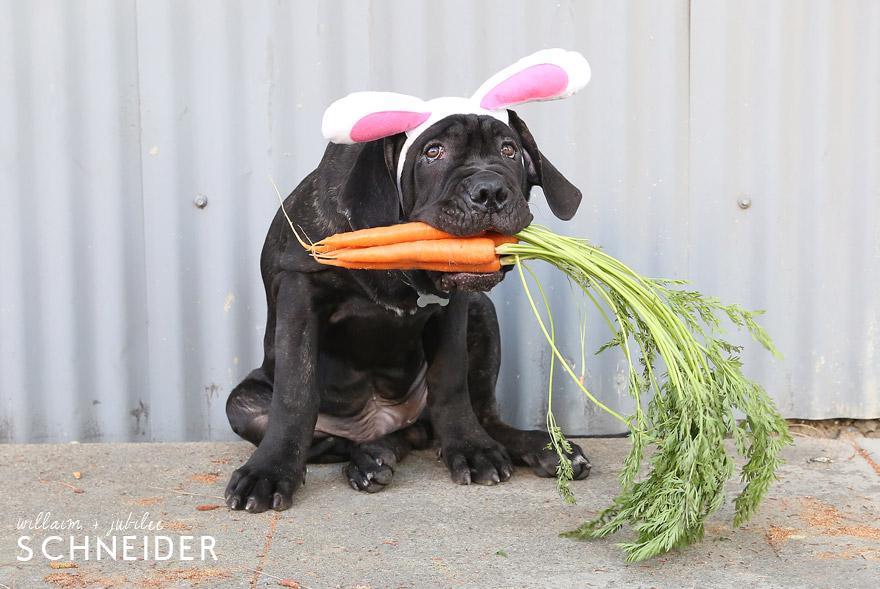 bunny-10