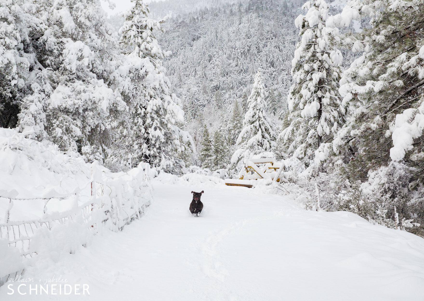 snow-puppy-2