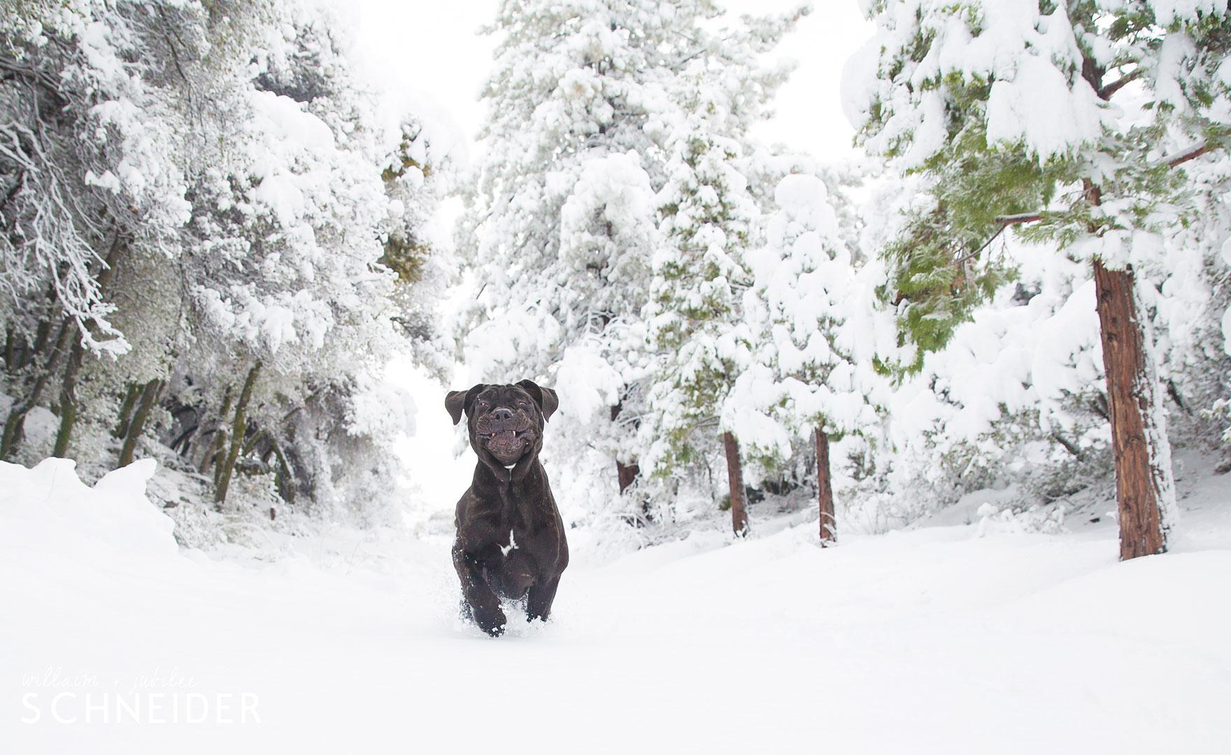 snow-puppy-5