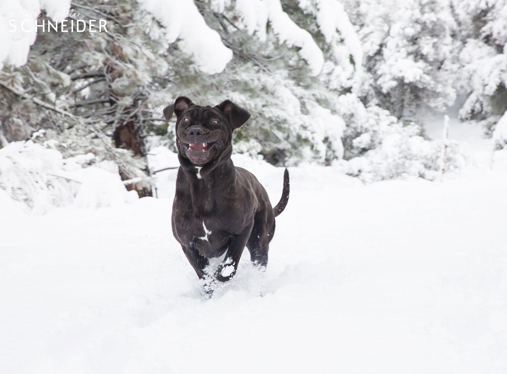 snow-puppy-7