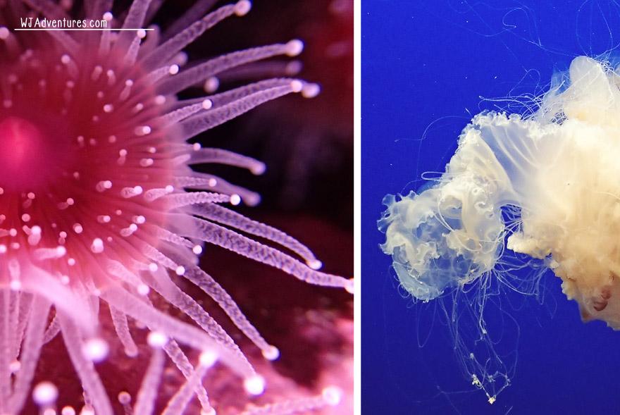 monterey-aquarium-6